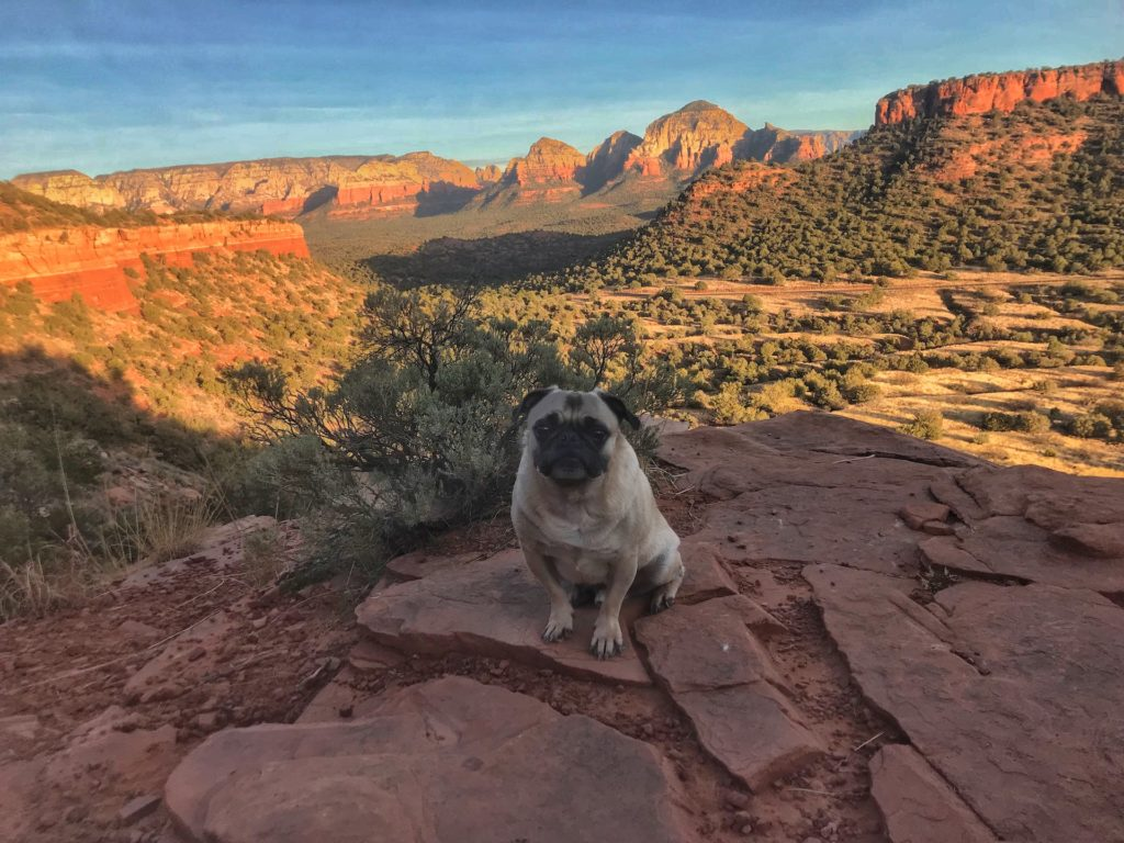 Best hikes for dogs in Arizona