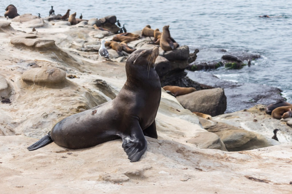 Best things to do in San Diego seals