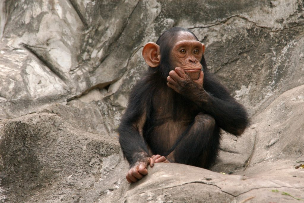 Best things to do in San Diego zoo