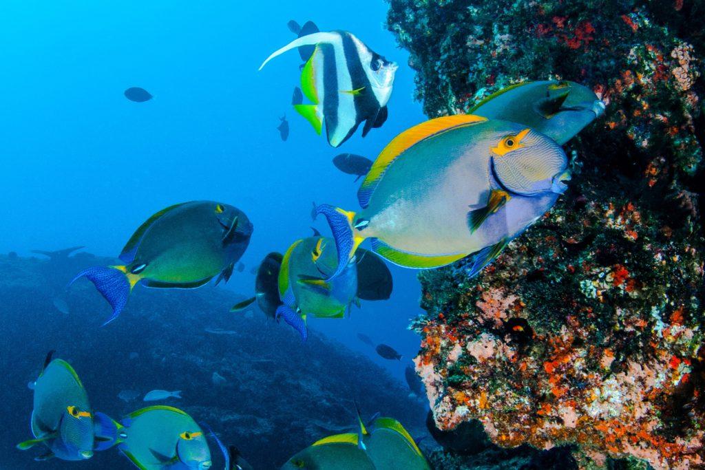 San Diego Bucket List Sea World