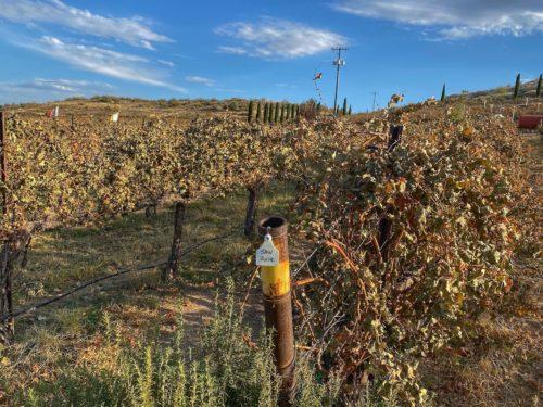Best Wineries In Sedona Acantra Vineyard & Winery 3