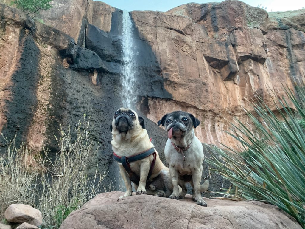 Best hikes in Arizona For dogs