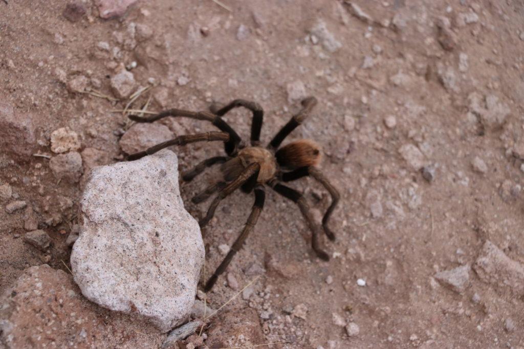 The phoenix bucket list things you have to do hiking tarantula