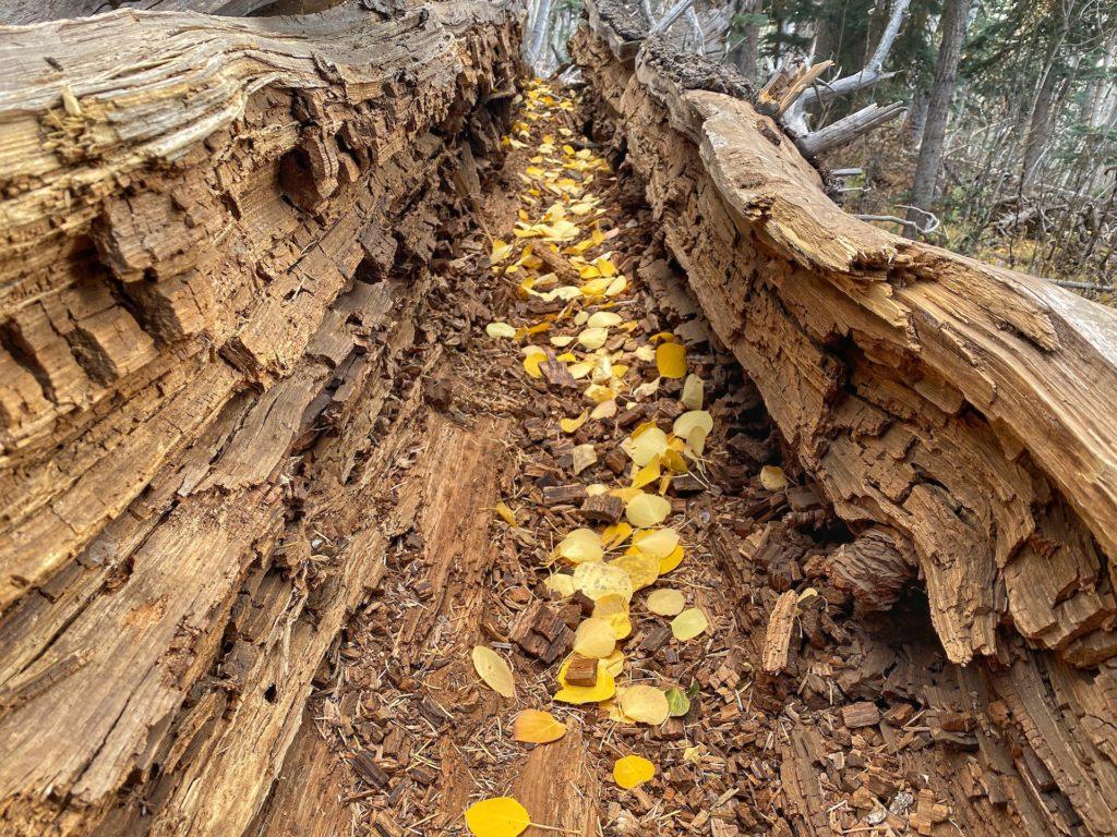 Humphreys Peak Hike Guide & Tips