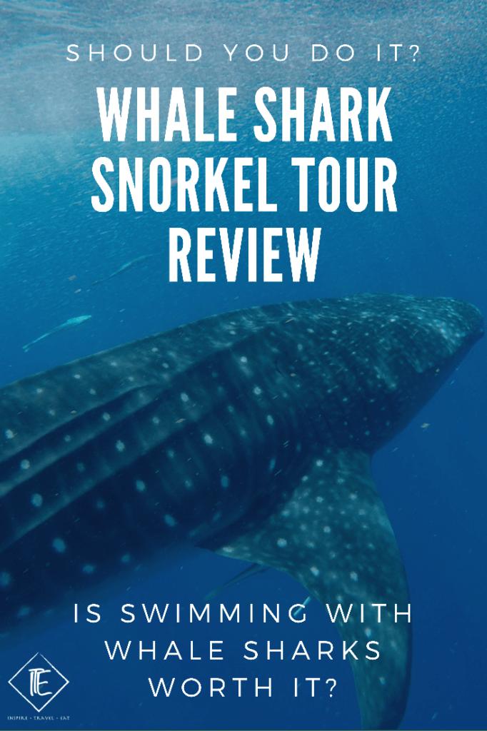 Whale Shark Snorkel Tour Review